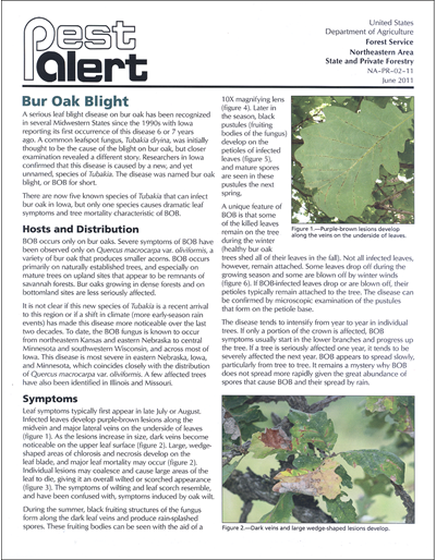 Pest Alert - Bur Oak Blight