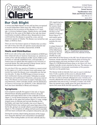 Pest Alert - Bur Oak Blight