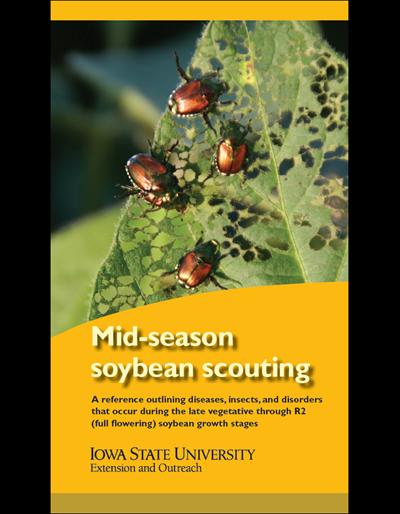 Mid-season Soybean Scouting
