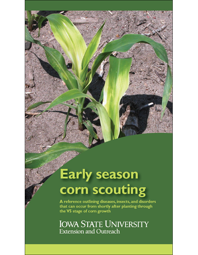 Early Season Corn Scouting