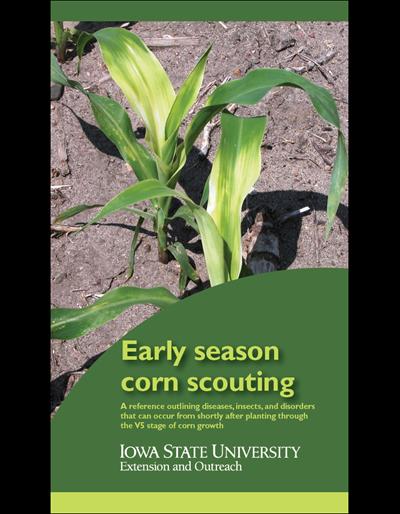 Early Season Corn Scouting