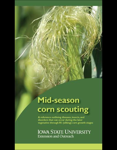 Mid-season Corn Scouting