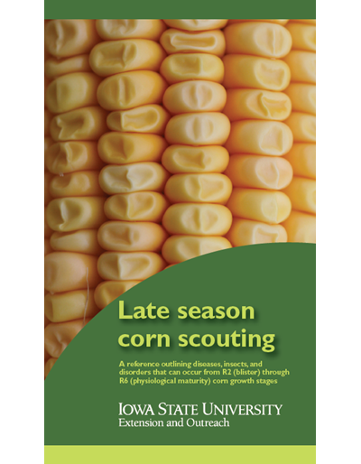 Late Season Corn Scouting