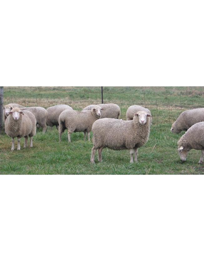 National Sheep Symposium - 2012 (eCourse)