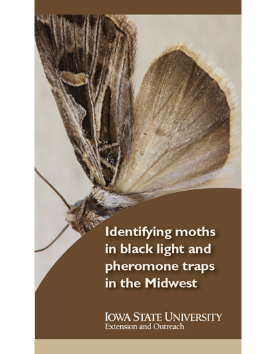 Identifying moths in black light and pheromone traps in the Midwest
