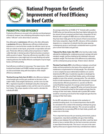 Phenotypic Feed Efficiency - National Program for Genetic Improvement of Feed Efficiency in Beef Cattle