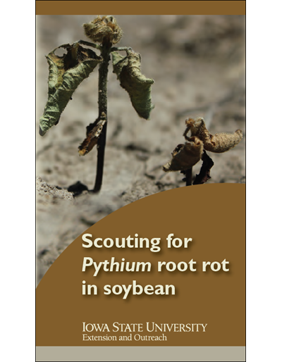 Scouting for Pythium root rot in Soybean