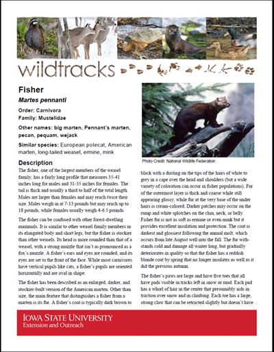 WildTracks: Fisher