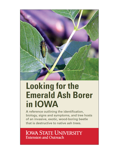 Looking for the Emerald Ash Borer in Iowa