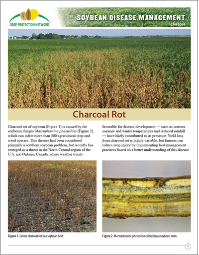Charcoal Rot