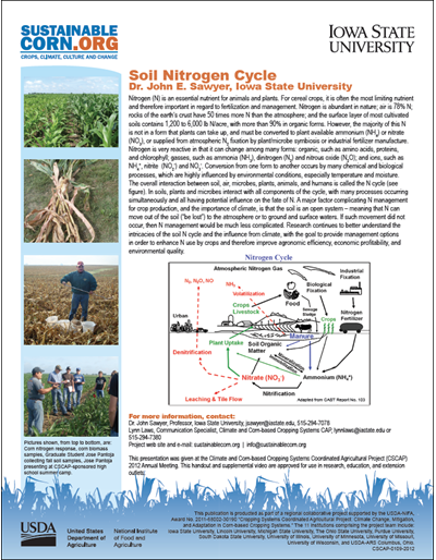 Soil Nitrogen Cycle