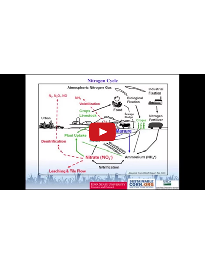 Soil Nitrogen Cycle (Video)