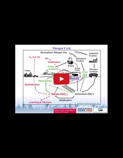Soil Nitrogen Cycle (Video)