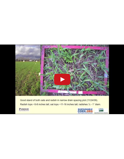 Cover Crops (Video)
