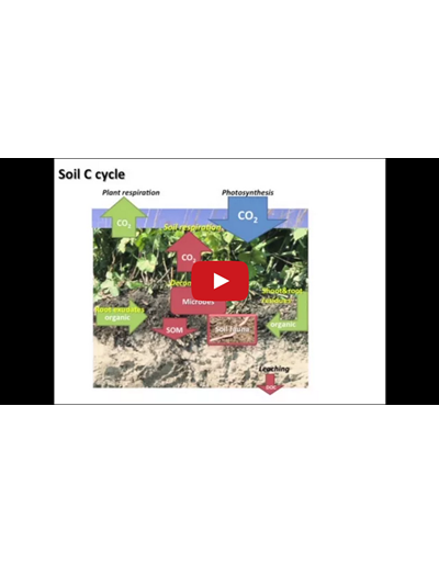 The Soil Carbon Cycle (Video)