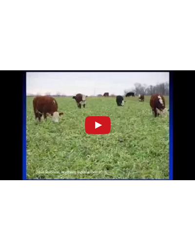 Cover Crop Selection and Management Part 2 (Video)