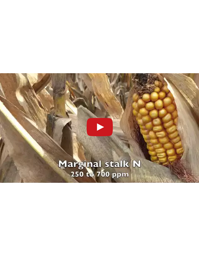 End of Season Cornstalk Nitrate Testing (Video)