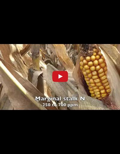 End of Season Cornstalk Nitrate Testing (Video)