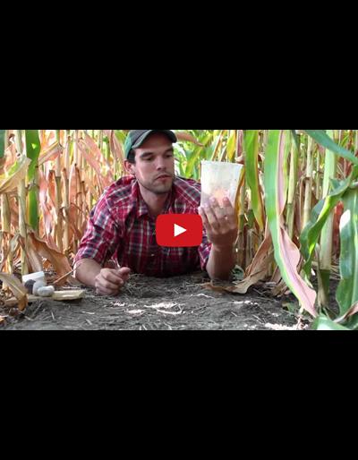 Pitfall Tutorial (Video)