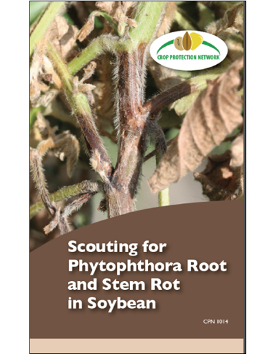 Scouting for Phytophthora Root and Stem Rot in Soybean