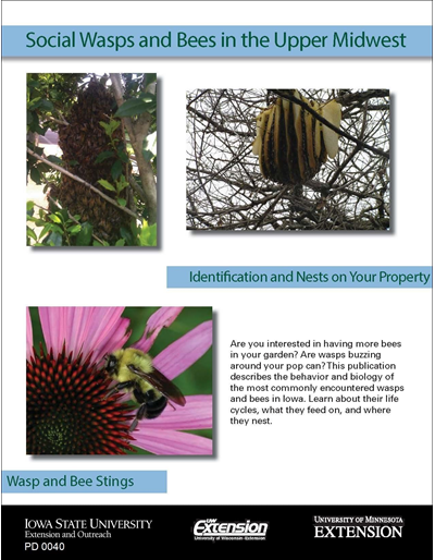 Social Wasps and Bees in the Upper Midwest