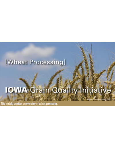 Wheat Processing Module