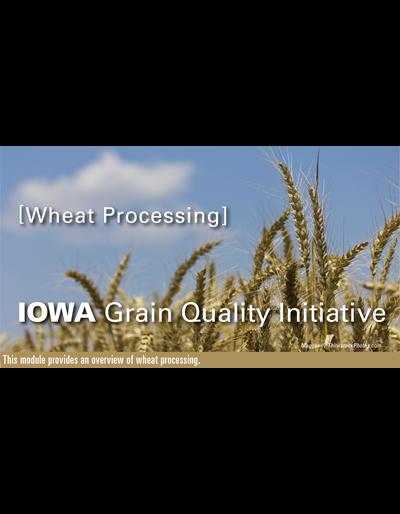 Wheat Processing Module