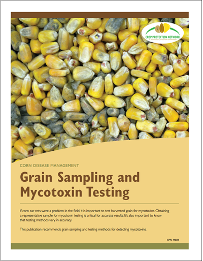 Corn Disease Management - Grain Sampling and Mycotoxin Testing