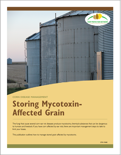 Corn Disease Management - Storing Mycotoxin-Affected Grain