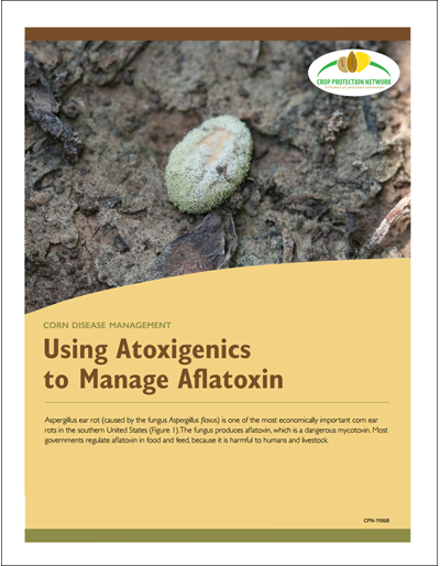 Corn Disease Management - Using Atoxigenics to Manage Aflatoxin