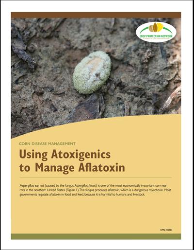 Corn Disease Management - Using Atoxigenics to Manage Aflatoxin