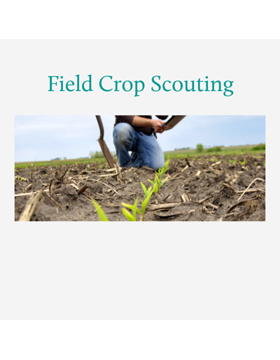 Corn and Soybean Field Guide Web Book