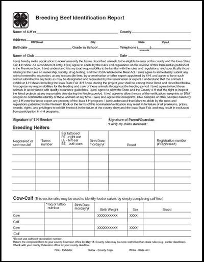 Breeding Beef Identification Report