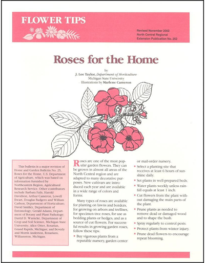 Roses for the Home