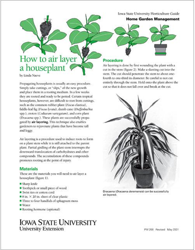 How to Air Layer a Houseplant