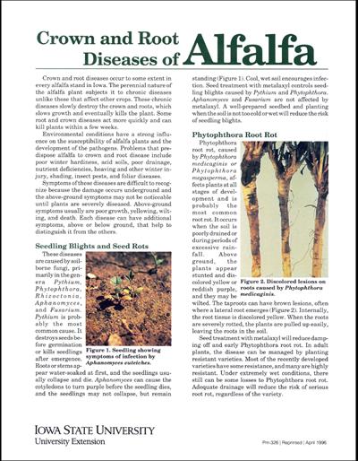 Crown and Root Diseases of Alfalfa