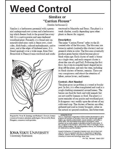 Smilax or Carrion Flower