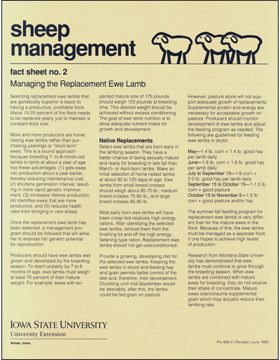 Managing the Replacement Ewe Lamb - Sheep Management