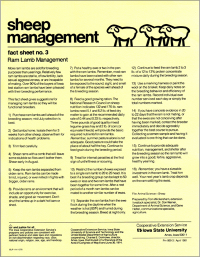 Ram Lamb Management - Sheep Management
