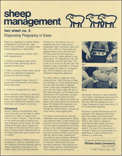 Diagnosing Pregnancy in Ewes - Sheep Management