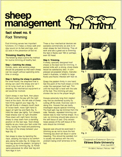 Foot Trimming - Sheep Management