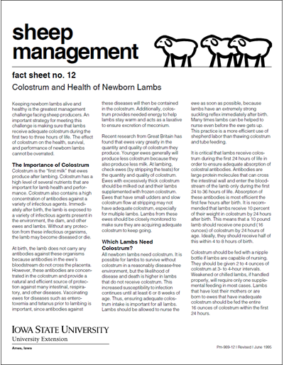 Colostrum and Health of Newborn Lambs - Sheep Management