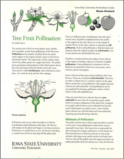 Tree Fruit Pollination