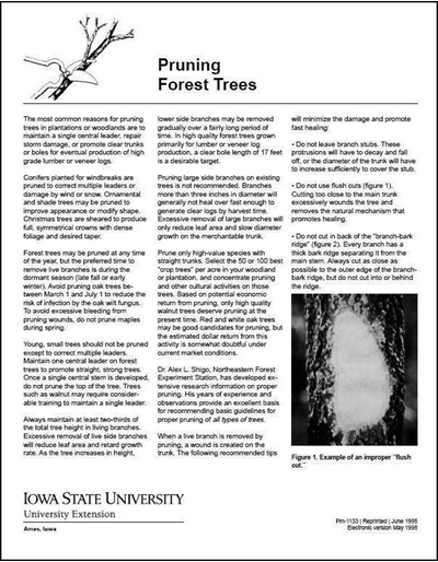 Pruning Forest Trees