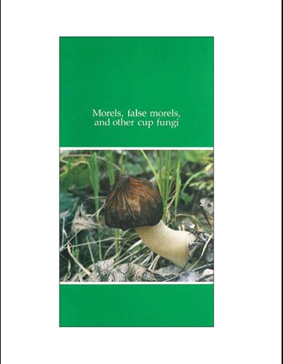 Morels, False Morels and Other Cup Fungi