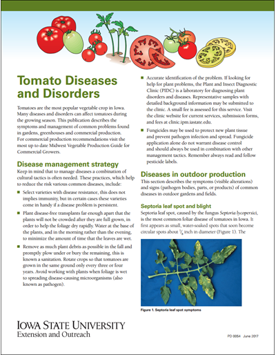 Tomato Diseases and Disorders