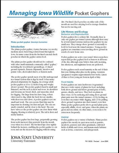 Pocket Gophers -- Managing Iowa Wildlife