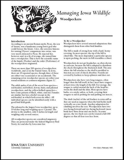 Woodpeckers -- Managing Iowa Wildlife