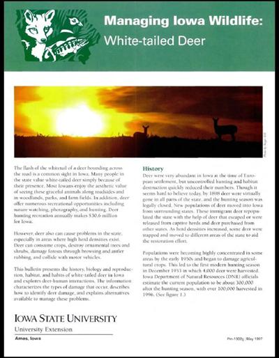 White Tailed Deer -- Managing Iowa Wildlife