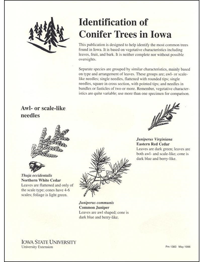 Identification of Conifer Trees in Iowa